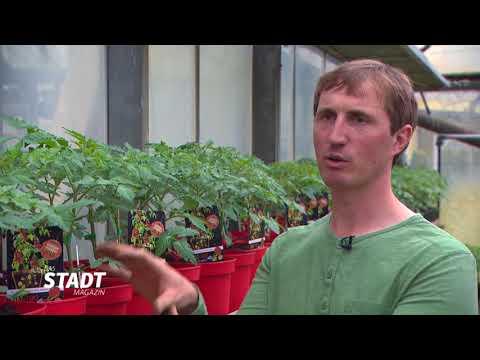 Gemüse des Jahres 2018 - ERd2-Tom2