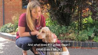 About deaf people and their hearing dogs trained by Hearing Dogs for Deaf People