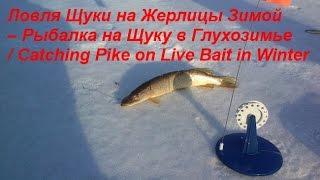 Рыбалка в свердловской области на жерлицы зимой