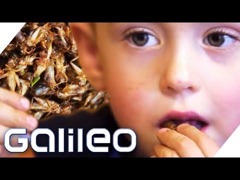 Das Reinigen von den Parasiten von den Kürbissamen den Kindern