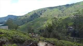 preview picture of video 'Cameron Highlands'