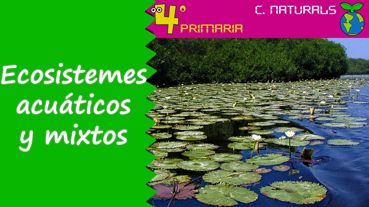 Ciències de la Naturalesa. 4t Primària. Tema 5. Ecosistemes naturals aquàtics i mixtos