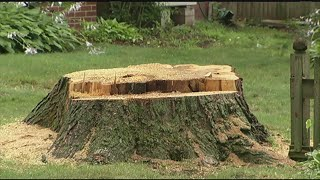 Who has to pay for repairs caused by fallen trees?
