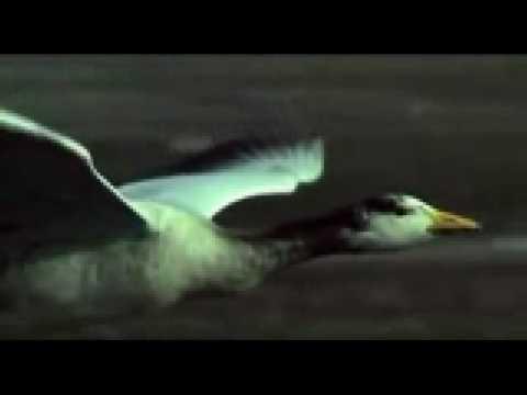 Slow Down (Song) by Morcheeba