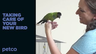 How to Care for a New Pet Bird (Petco)
