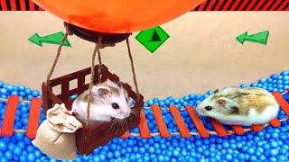 🐹 Little Hamster Pet adventure
