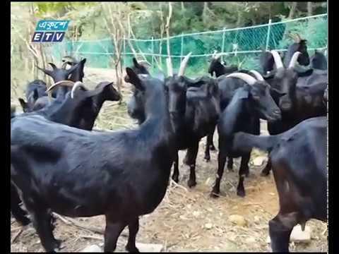 ব্ল্যাক বেঙ্গলের জীবন রহস্য বা জিন নকশা উন্মোচন