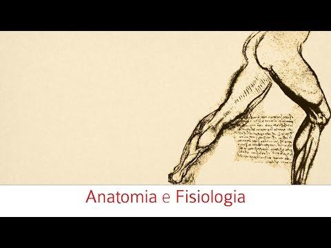 Patologia di vene di gambe