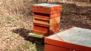 preview picture of video 'Bee keeping in Surrey'
