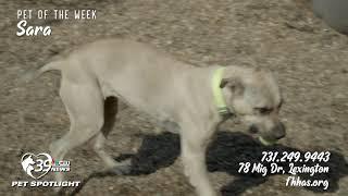 Pet Spotlight: Meet Sara