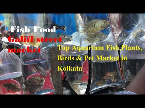 Top Aquarium Fish Plants Birds Pet Market In Kolkata Westbengal