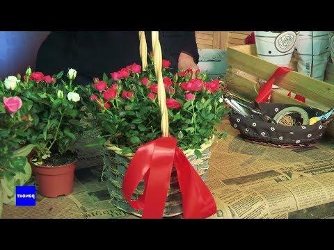 Как выращивать розы в домашних условиях и ухаживать за ними. Зелёный мир