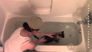 Басин кошачий банный день | How to bathe a cat