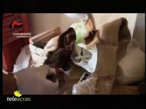 Eccitatore per le donne in farmacie dellUzbekistan