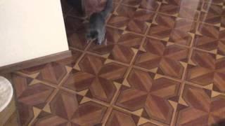 Как отучить кошку лазить на стол и в тарелку хозяина