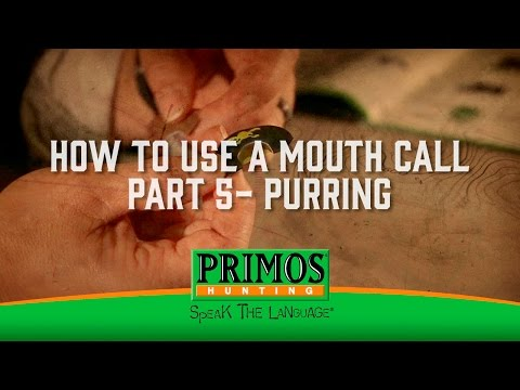 How to Use a Mouth Turkey Call Part 5 - Purring video thumbnail
