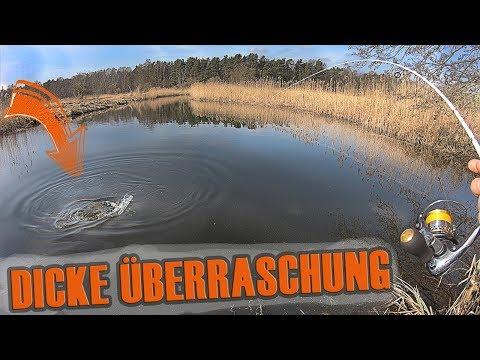 Dicke Überraschung beim Angeln am Bach! Hechtalarm am Döbelbach! Fischen im Frühjahr auf Raubfisch