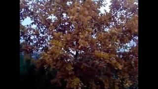 Oblíbenosti na podzim #1