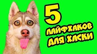 5 ЛАЙФХАКОВ ДЛЯ ХАСКИ! (Хаски Бублик) Говорящая собака Mister Booble