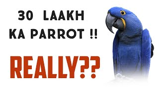 30 laakh ka parrot | Hyacinth macaw | world's largest parrot | most expensive parrot |