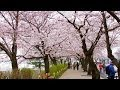 Best Time to Visit Seoul Travel