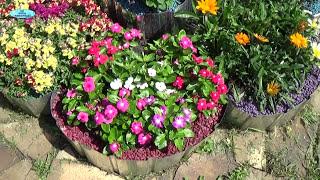 Обзор однолетних цветов видео