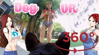 360º Camera on a Dog! (Madventure 360º)