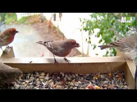 Bird Cam | Animal Planet L!VE
