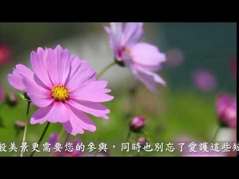 大樹區公所-微花海宣傳短片