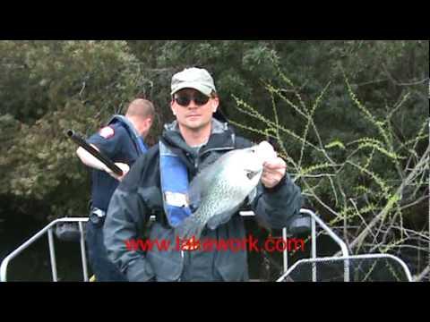 Electrofishing Survey on Coastal South Carolina Lake (Shock Boat)