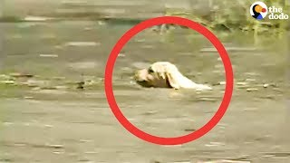 Cameraman Rescues Puppy Caught In Flood   The Dodo