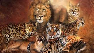 Кошачьи. Виды кошачьих. Рассказы о животных детям.