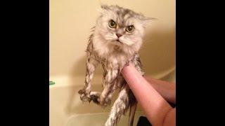 Лучшие кошачие фейлы месяца! Смешные падения, недоразумения и просто очень странные кошки!