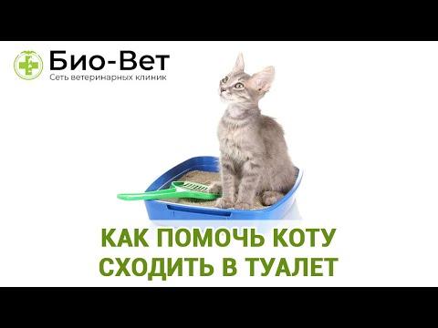 Как Помочь Коту Сходить в Туалет 🐈 // Сеть Ветклиник Био-Вет