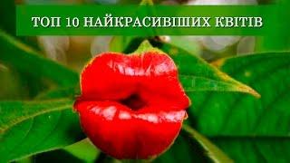 💐 ТОП 10 САМЫХ КРАСИВЫХ ЦВЕТОВ НА ЗЕМЛЕ ! 😍❤️🌷