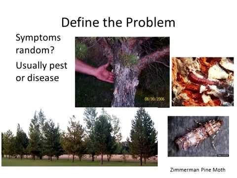 , title : 'Diagnosing Plant Problems