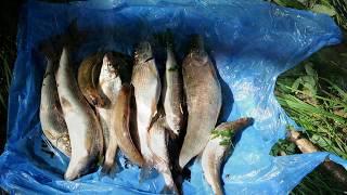 Рыбалка в хакасии форум черная речка