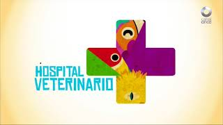 Hospital Veterinario - Programa 2