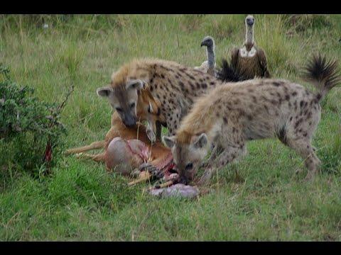 Luta Até a Morte - Animais Selvagens ( Fight to Death Wild animals )