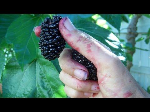 Травы понижающие сахар в крови при диабете 1 типа