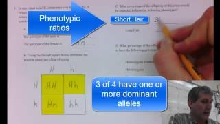 Punnett Square Sample Problem