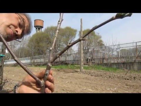Medicine per aumento di una potenzialità in Belarus