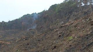 TIn Tức 24h   Bắc Giang: Lục Nam tiếp diễn chặt phá rừng trái phép
