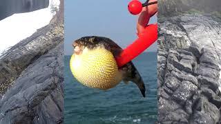 Хорошая рыбалка на гоа с берега
