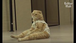 Am I A Cat Or A Human? (Part 1) | Kritter Klub