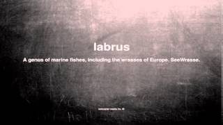 What does labrus mean