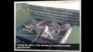 preview picture of video 'Fishing with otters Gypsymichelle's photos around Narail, Bangladesh (otter fishing bangladesh)'