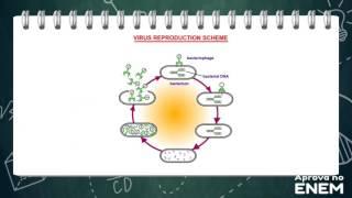 Vírus e doenças virais