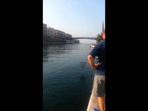 La previsione di pesca su Lena