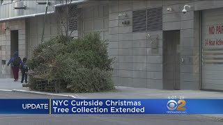 Christmas Tree Collection Extended In NYC